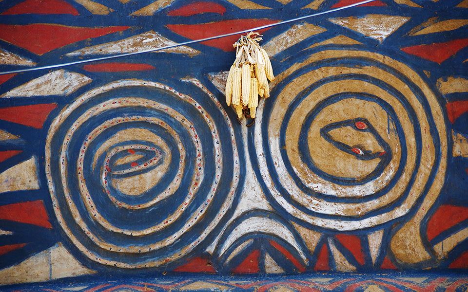 Corncobs hang on a painted wall
